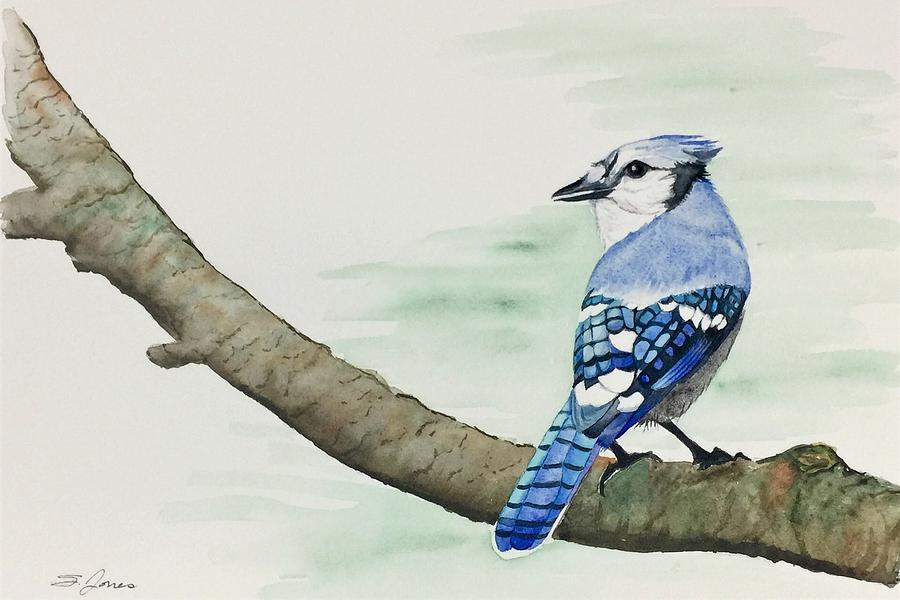 Jay in the Pine by Sonja Jones