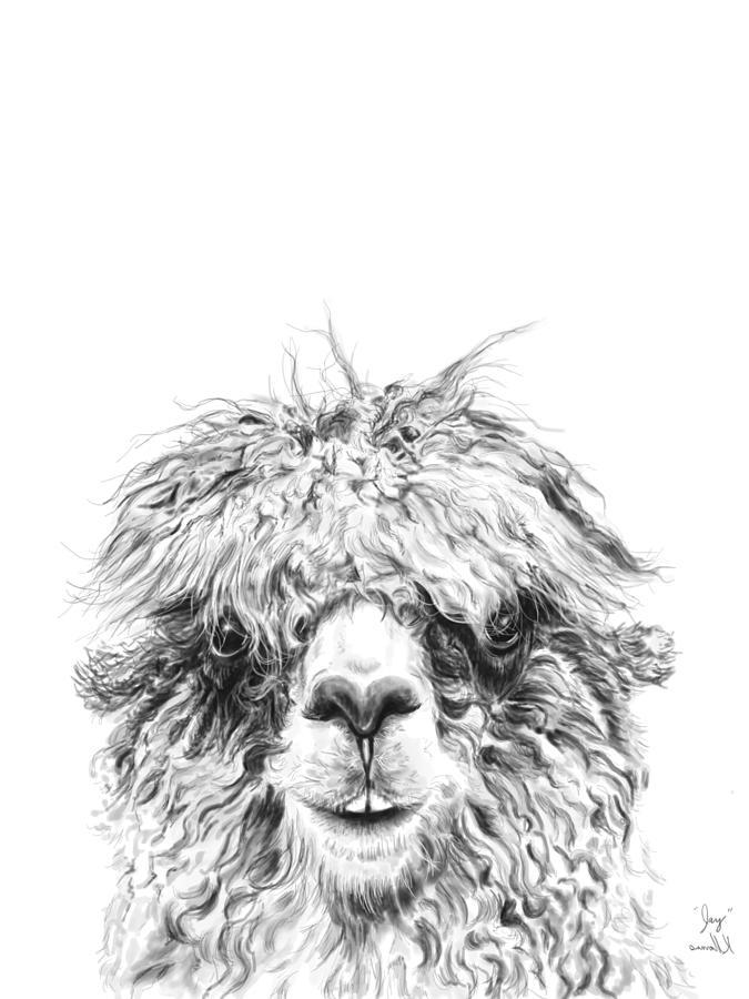 Llamas Drawing - Jay by K Llamas