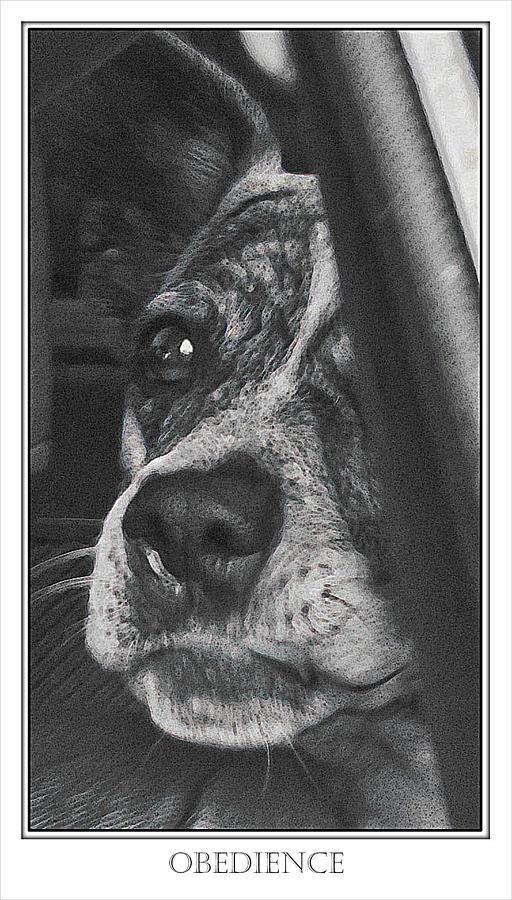 Dog Photograph - Jazz by Karen  W Meyer