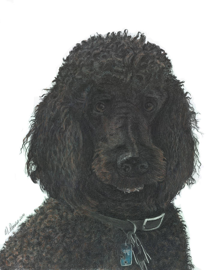 Poodle Drawing - Jean-Claude by Marlene Piccolin