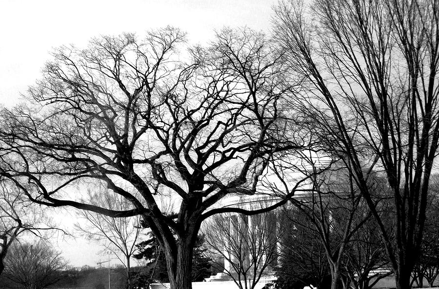 Photography Photograph - Jefferson Memorial - Distant View by Fareeha Khawaja