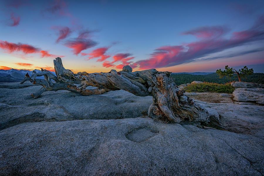 Jeffrey Pine Photograph - Jeffrey Pine Dawn by Rick Berk