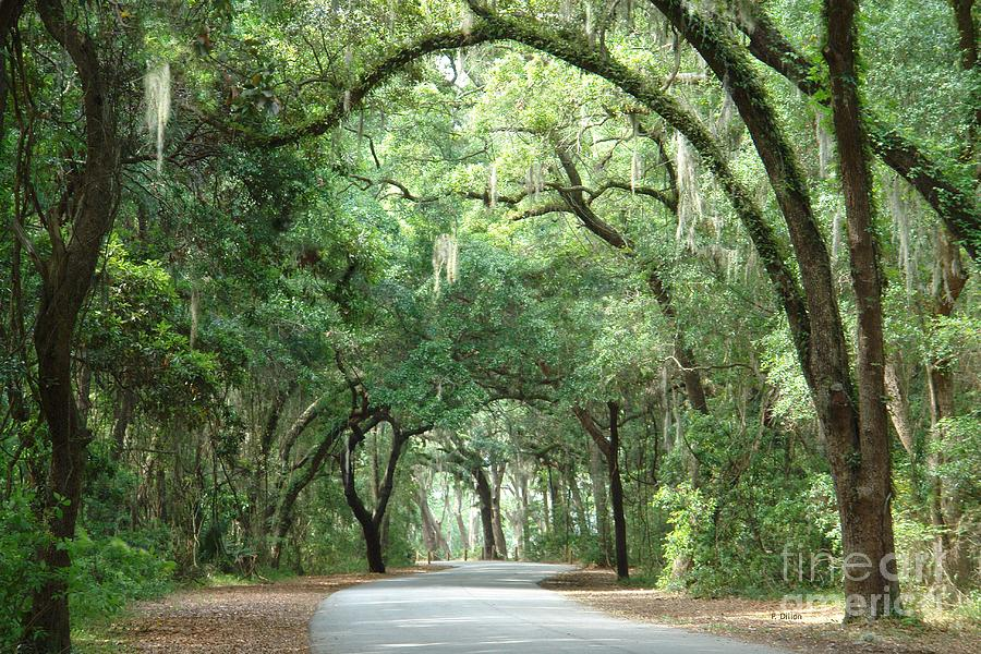 Trees Photograph - Jekyll Island Arches by Frances  Dillon