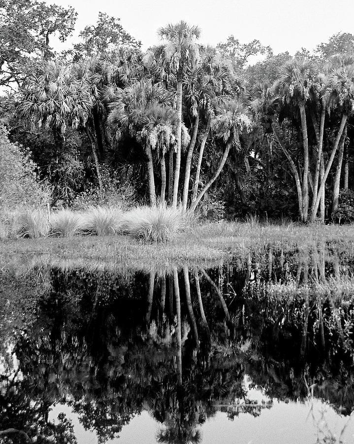 For Sale Photograph - Jelks View by Robert Wilder Jr