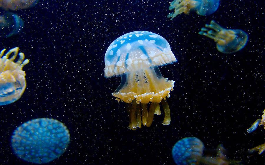 Jellyfish Digital Art - Jellyfish by Dorothy Binder