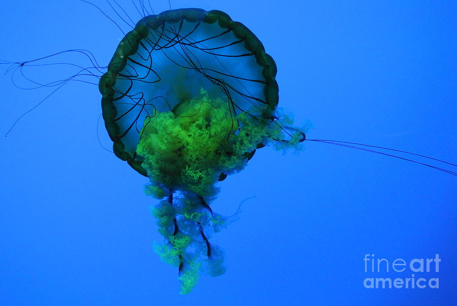 Marine Life Photograph - Jellyfish In Green by Bernd Billmayer