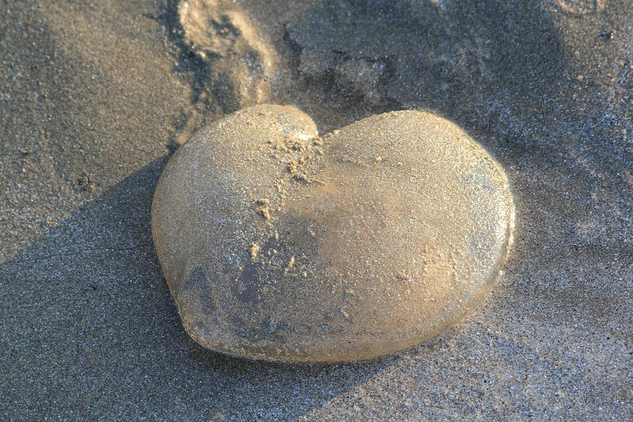 Heart Photograph - Jellyfish With A Big Heart by Shane Bechler