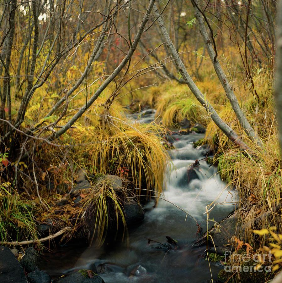 Landscape Photograph - Jenny Creek In Autumn by Norman Dean
