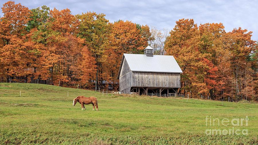 Horse Photograph - Jericho Hill Vermont Horse Barn Fall Foliage by Edward Fielding