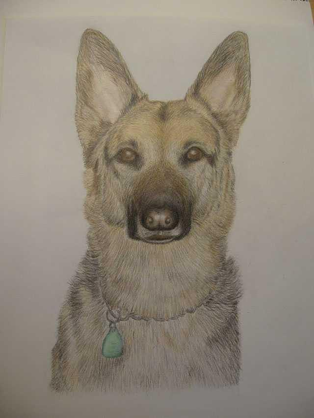 Dog Drawing - Jerry Lee  by Kathie Papasso