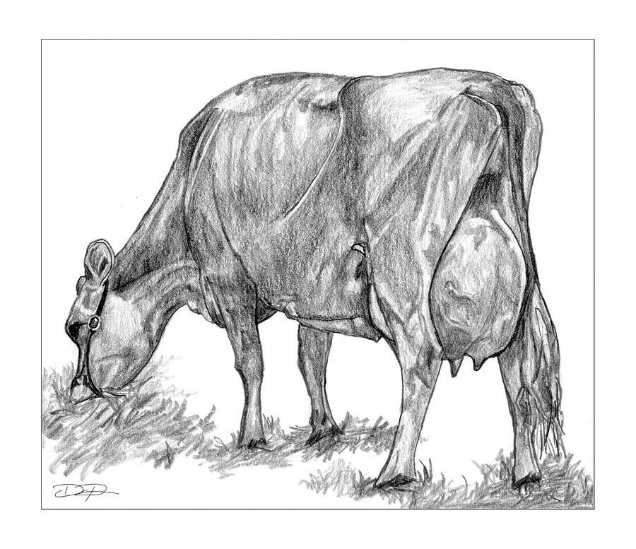 Jersey Cow Drawing - Jersey Milking Cow by Dan Pearce