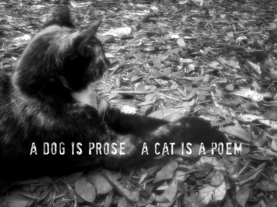 Cat Photograph - Jesk Quote by JAMART Photography