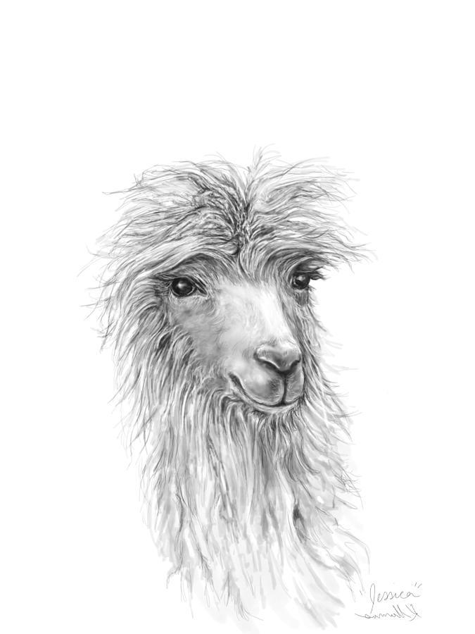 Llamas Drawing - Jessica by K Llamas