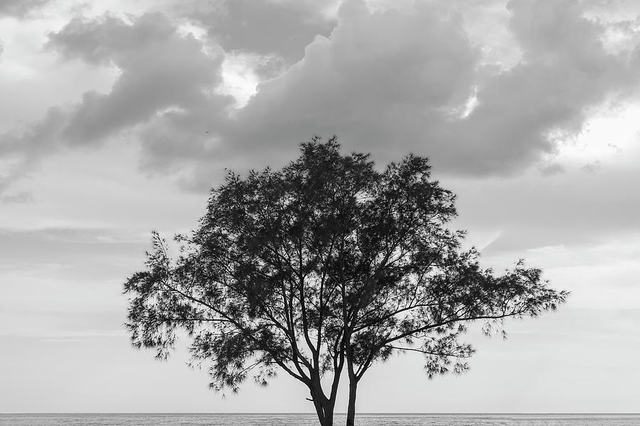 Coastline Photograph - Jetty Tree by Robert Wilder Jr