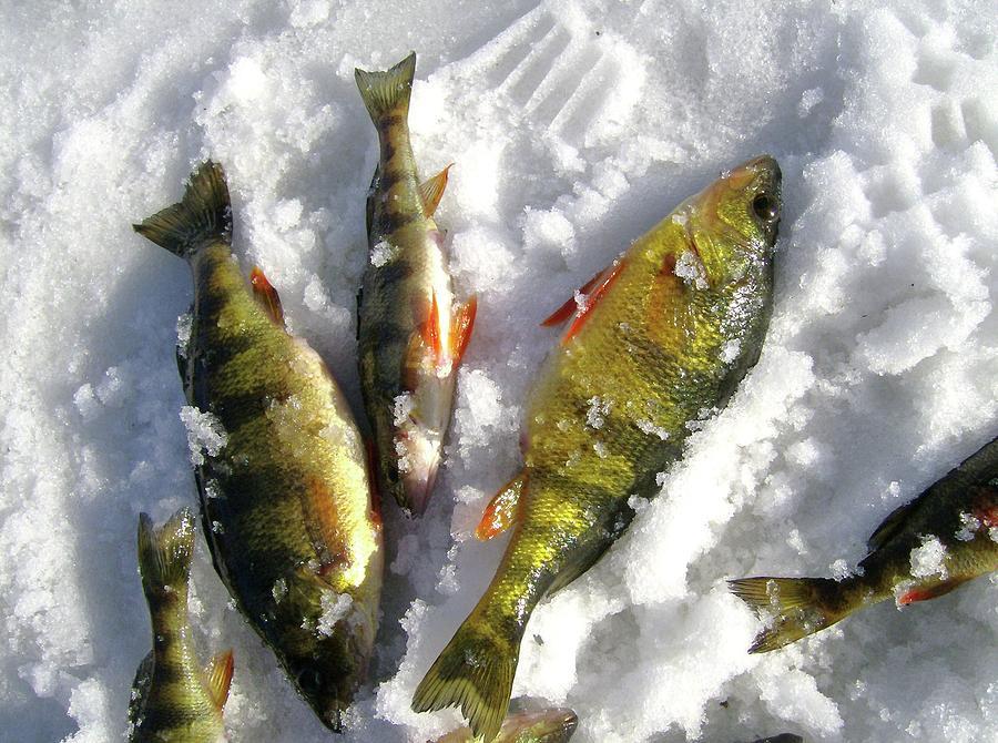 Fish Photograph - Jiggin by Brian Degnon
