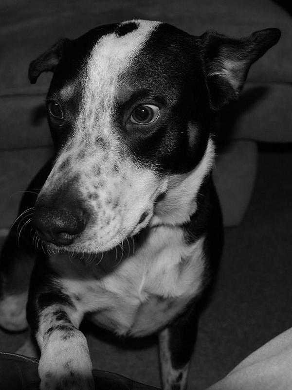 Black And White Photograph - Jimmy by Rob Hans