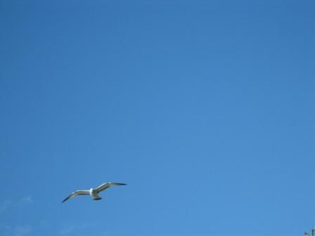 Gull Photograph - Jls Flight by Joanna Baker - Jenkins
