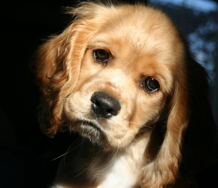 Dog Photograph - Joe Cocker by Kerry Reed