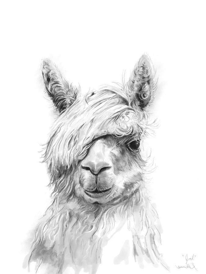 Llamas Drawing - Joel by K Llamas