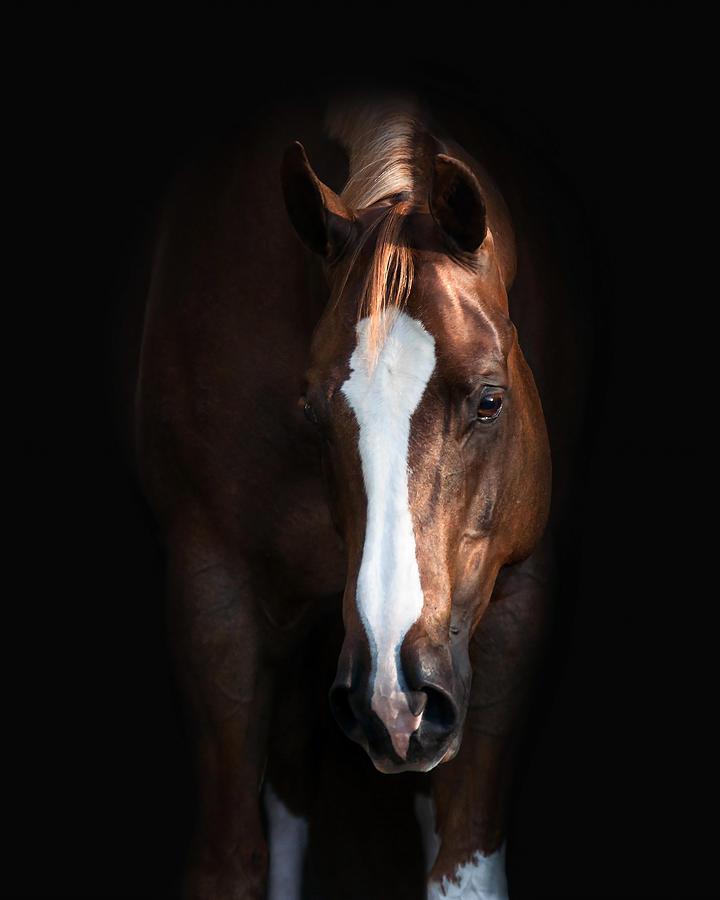 Paint Horse Photograph - Joker by Pamela Hagedoorn