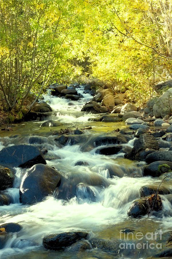 Jones Creek in Fall by Vinnie Oakes