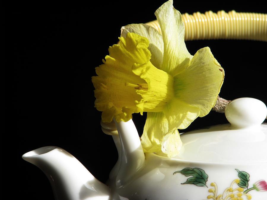Jonquil Photograph - Jonquil Tea by Angela Davies