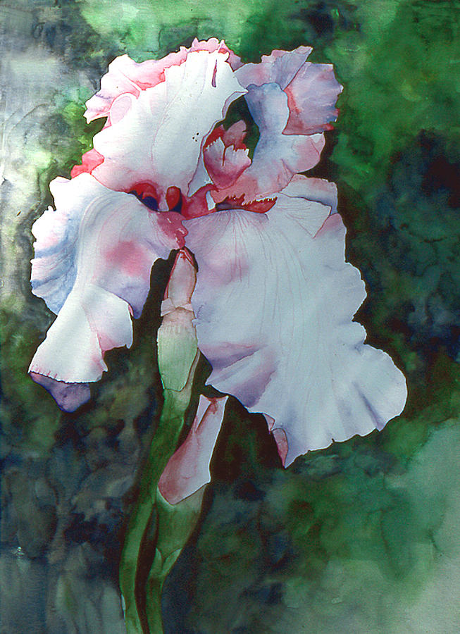 Botanical Painting - Jons Iris by Eunice Olson