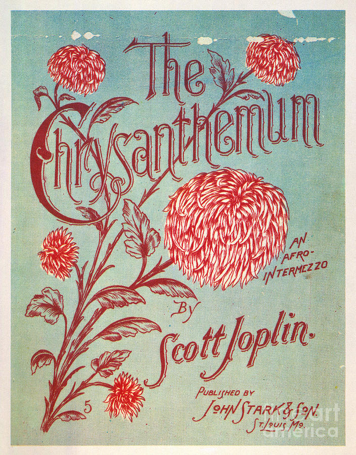 1904 Photograph - Joplin: Chrysanthemum by Granger