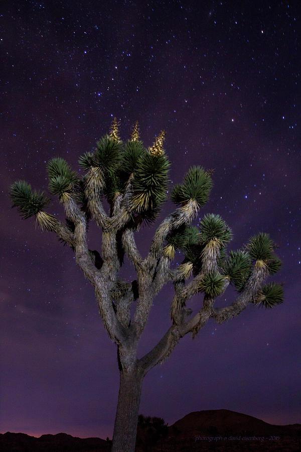 Joshua Tree And Night Sky 3