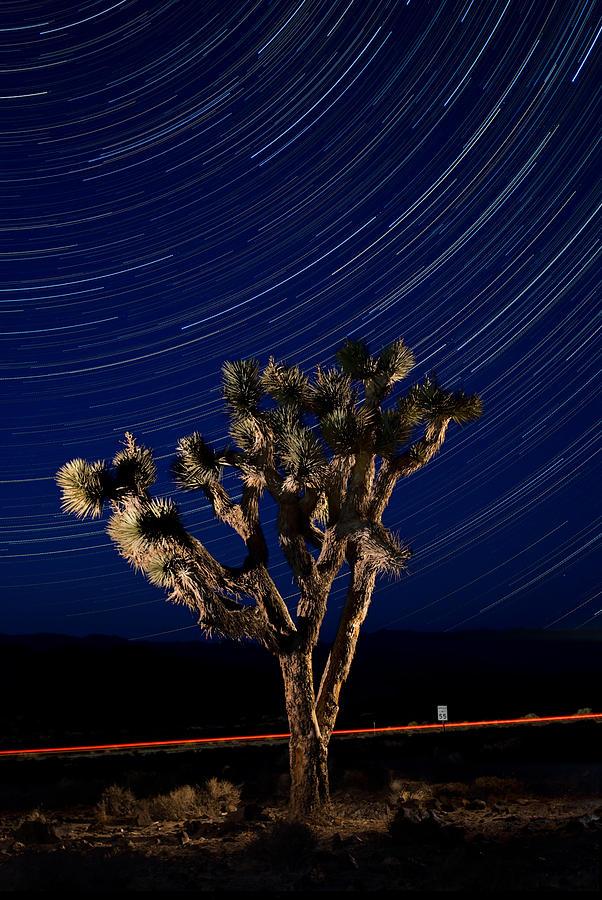 Death Photograph - Joshua Tree And Star Trails by Steve Gadomski
