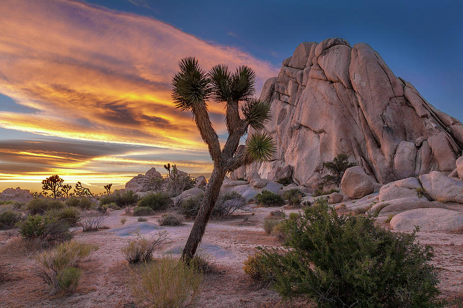 Joshua Tree Hidden Valley by Peter Tellone