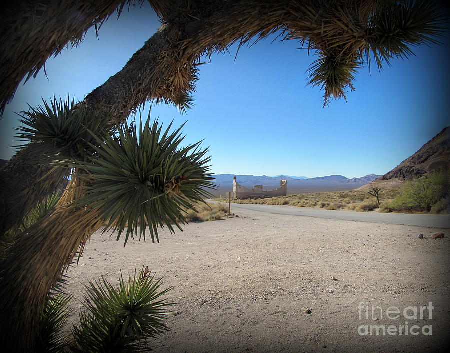 Rhyolite Photograph - Joshua Tree in front of Rhyolite ruins by Joy Patzner