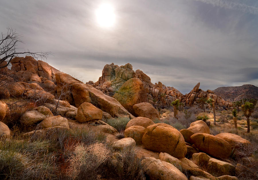 Desert Photograph - Joshua Tree National Monument by Kevin Felts