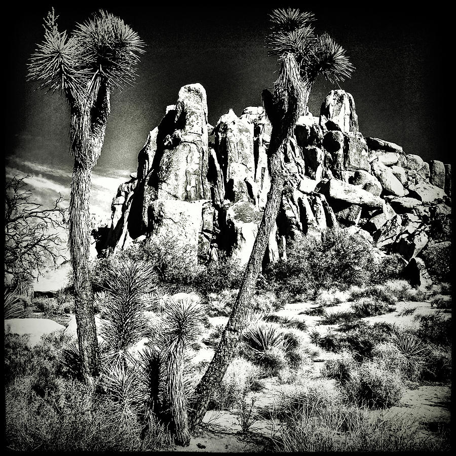 Joshua Tree National Park by Roger Passman