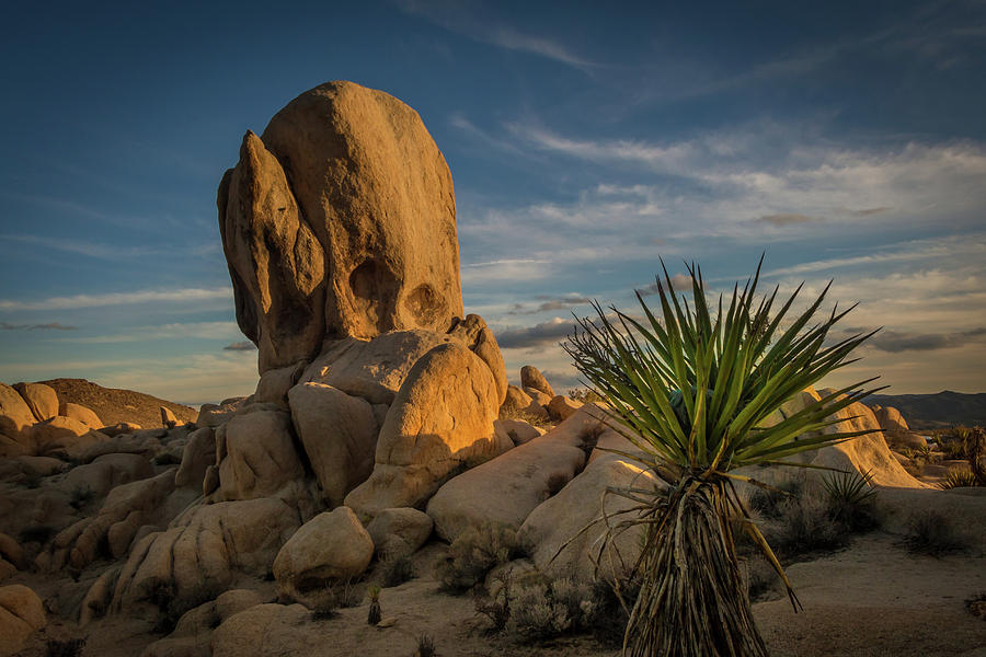 Joshua Tree Rock Formation by Ed Clark