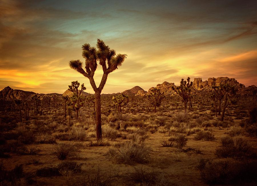 Joshua Tree Sunset by Geoff Coleman