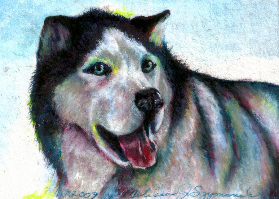 Dog Drawing - Jovial Nanook by Melissa J Szymanski