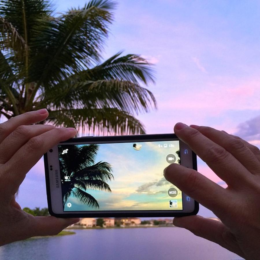 Palm Photograph - #juansilvaphotos #photography #mobile by Juan Silva
