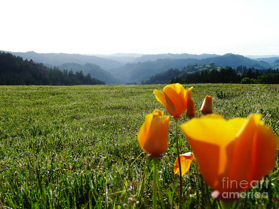 Poppies Photograph - Jubilant Poppies by JoAnn SkyWatcher