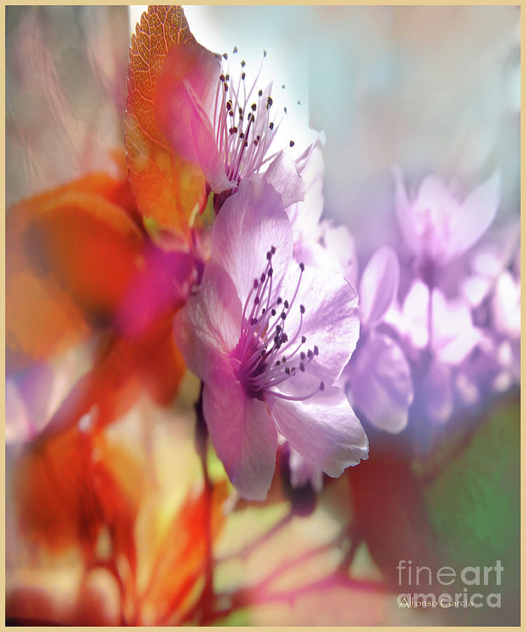 Decor Photograph - Juego Floral by Alfonso Garcia