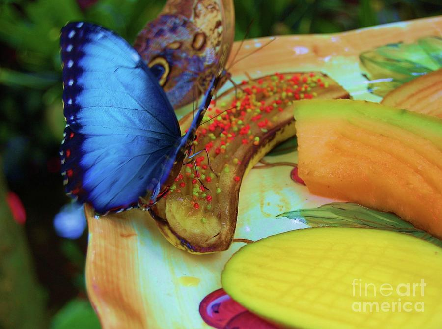 Butterfly Photograph - Juicy Fruit by Debbi Granruth