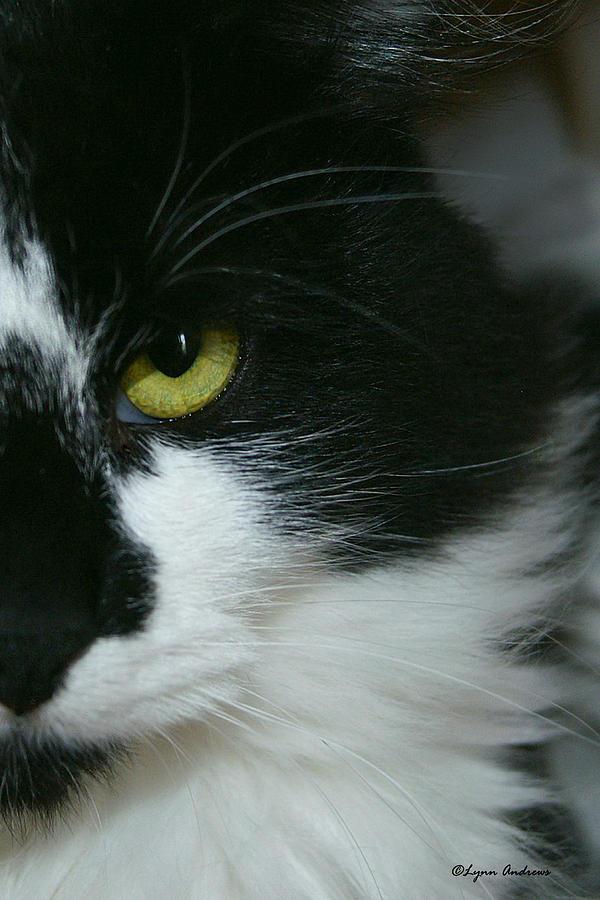 Cat Photograph - Julies Evil Eye by Lynn Andrews
