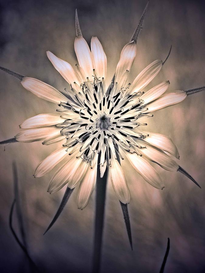 Flower Photograph - July 1 2010 by Tara Turner
