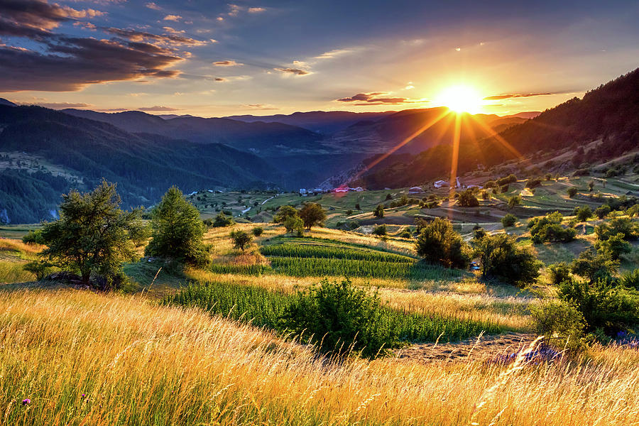 Bulgaria Photograph - July Sun by Evgeni Dinev