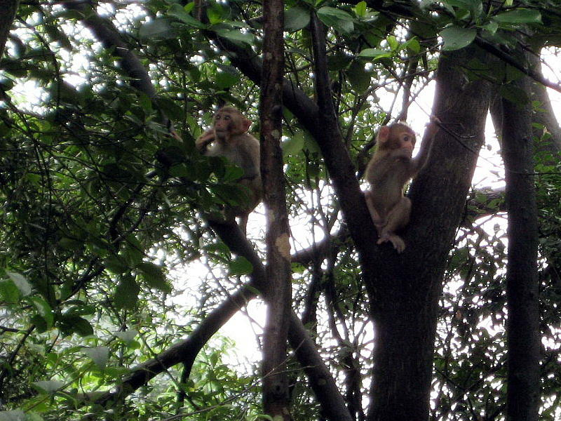 Monkeys Photograph - Jumping Around by Ming Yeung