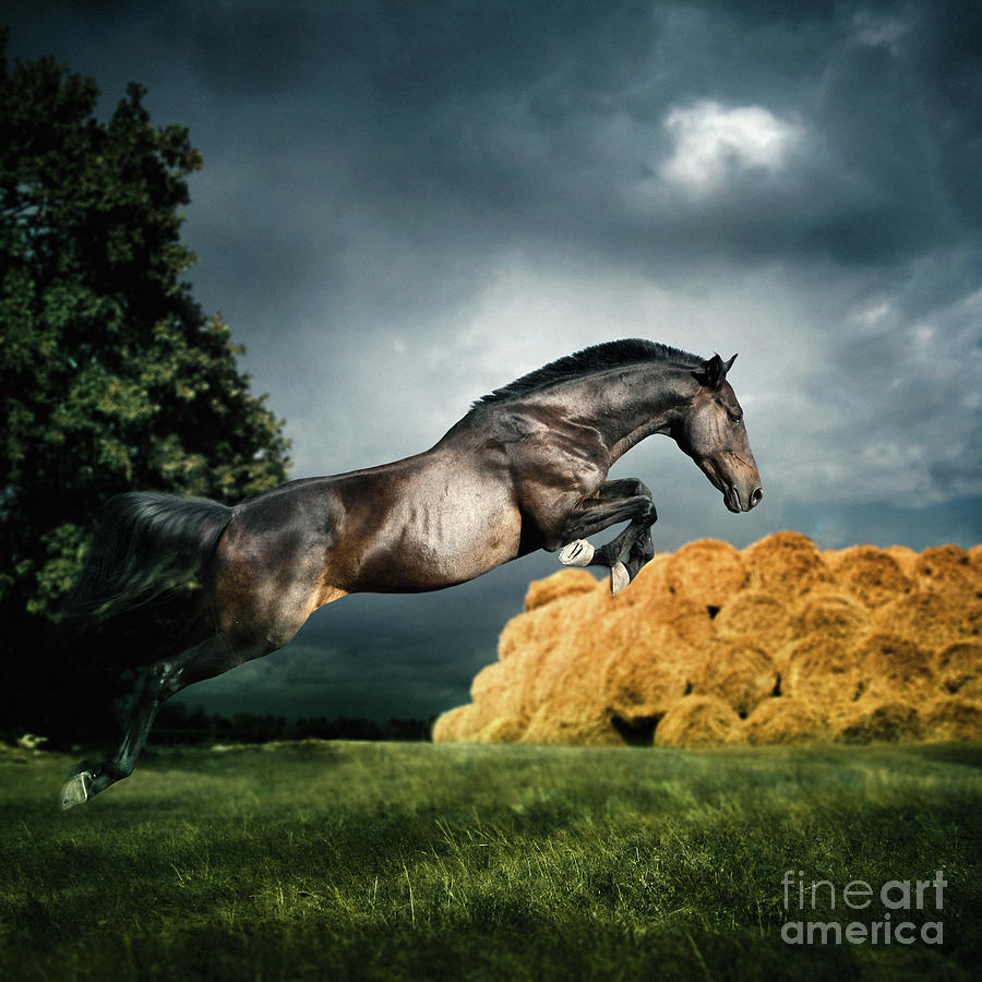 Horse Photograph - Jumping Black Stallion by Dimitar Hristov