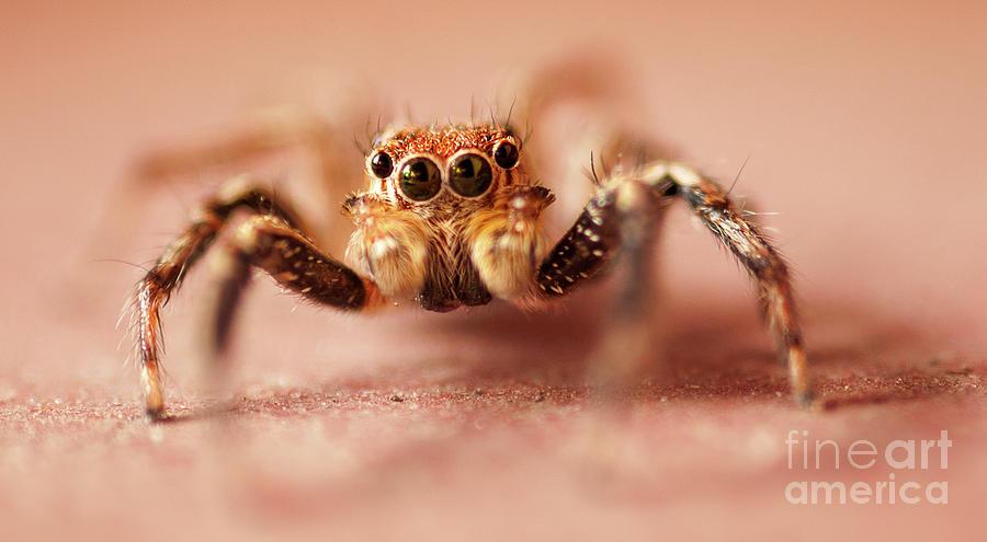 Jumping Spider Photograph by Venura Herath