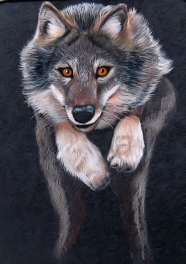 Wolves Drawing - Jumping Wolf by Lorraine Foster
