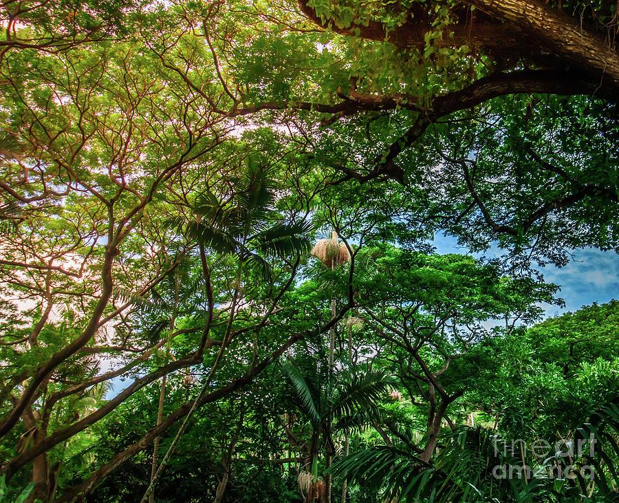 Jungle Photograph - Jungle Canopy Kauai Hawaii by Blake Webster