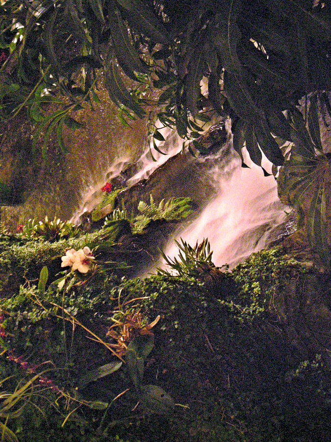 Opryland Photograph - Jungle by Utopia Concepts